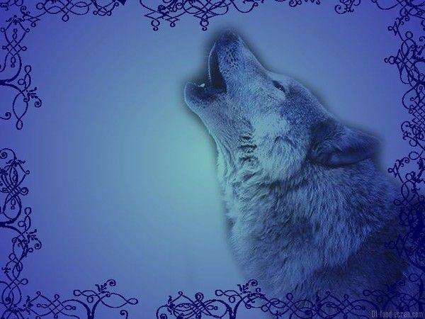 c6746f0a dans fond ecran loup